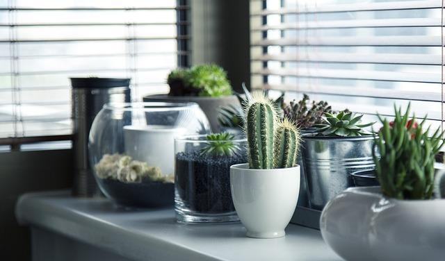Plants in pots or bottles