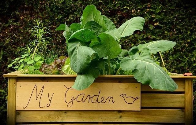 raised-bed plants