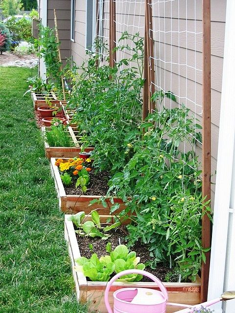 vertical-plants