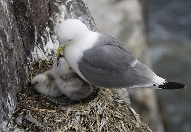 birds-nest-263160_640-min (1)