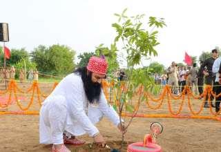 Dr MSG Planting-min (1)