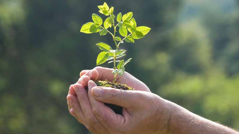 plant-a-tree