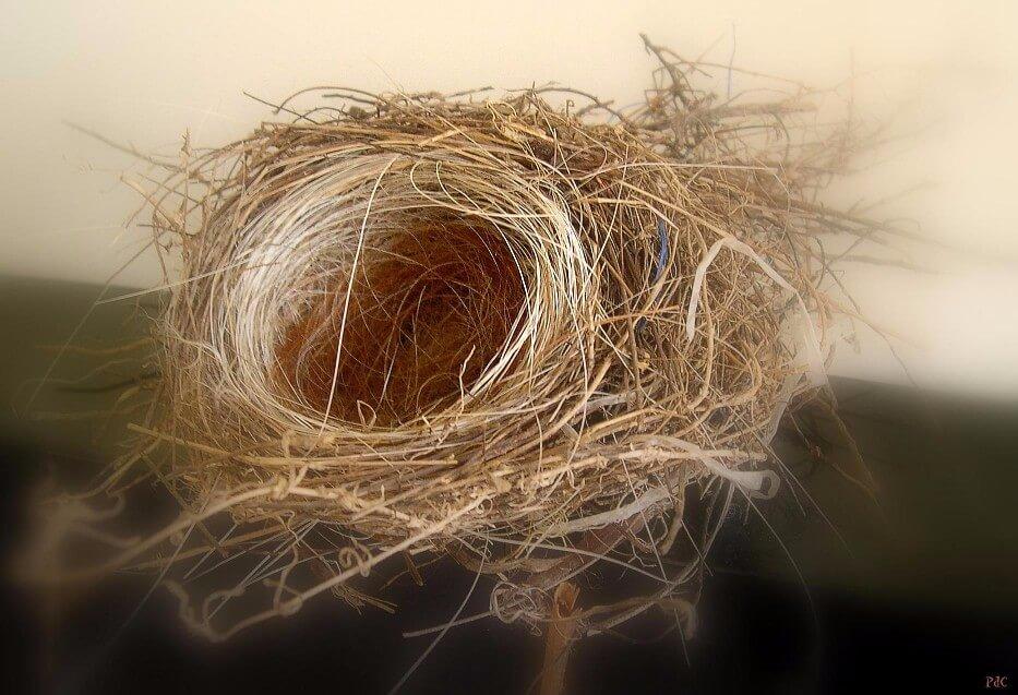 birds-nest-1-1