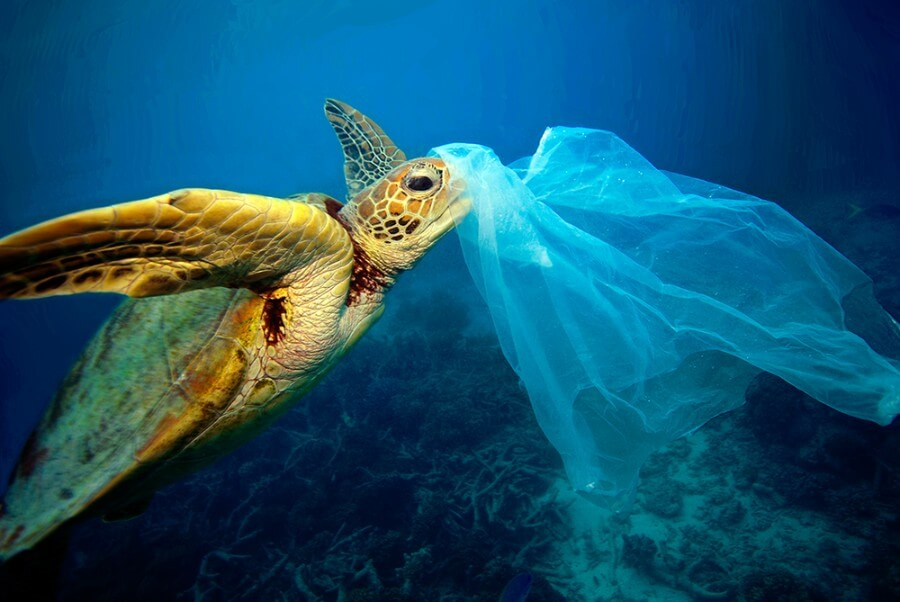 plastic-consume-sea-life-1