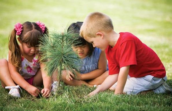 plant_trees