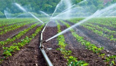 Micro Irrigation, Sprinkler Subsidy haryana