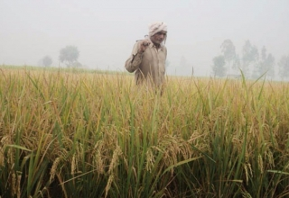 Indian Farmer crop insurance
